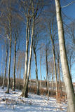 Beech (Fagus) forest. The beech (Fagus) forest on winter time in Tulisa Mountain royalty free stock photo