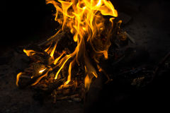 Beech fire burning Stock Photos