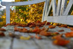 Beech foliage on an old white wooden bench Royalty Free Stock Photography