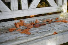 Beech foliage on an old white wooden bench Royalty Free Stock Images