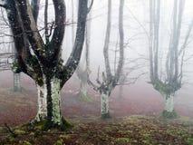 Beech forest Stock Photo