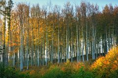 A beech forest in autumn colors Stock Photos