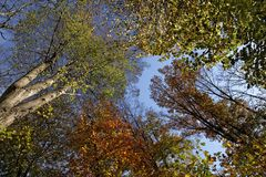 Beech forest in autumn, Lower Saxony, Germany Stock Photos
