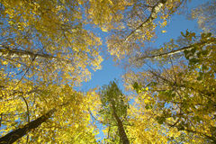 Beech forest detail in autumn with warm tone. Spain Stock Photo