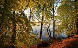 Beech forest. An early spring morning at a lake Stock Image
