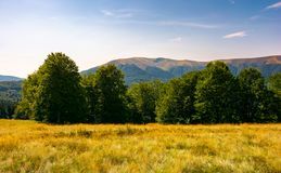 Beech forest at the foot of Apetska mountain. Lovely summer landscape of Carpathian mountains royalty free stock images