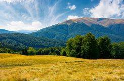 Beech forest at the foot of Apetska mountain. Lovely summer landscape of Carpathian mountains stock images