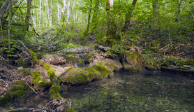 Beech forest, forest green 15. Beech forest, forest green, fairy forest, forest bathed in natural light, forest stream, a river in the forest, life-giving water Stock Photo
