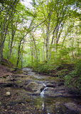 Beech forest, forest green 24 Stock Photo