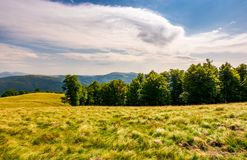 Beech forest on grassy hillside. Lovely scenery of Carpathian landscape in summer. location Svydovets ridge, Ukraine Royalty Free Stock Photo