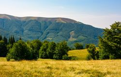 Beech forest on grassy meadows in mountains. Beautiful Landscape at the foot of Carpathian mountain Apetska Royalty Free Stock Image