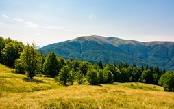 Beech forest on grassy meadows in mountains. Beautiful Landscape at the foot of Carpathian mountain Apetska Stock Images