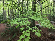 Beech forest Stock Photography