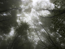 Beech forest. Stock Photography