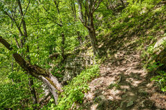 Beech forest and hiking trail Stock Images