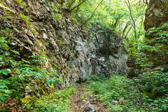 Beech forest and hiking trail Stock Photo