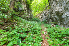 Beech forest and hiking trail Royalty Free Stock Photography
