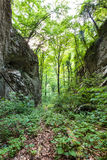 Beech forest and hiking trail Royalty Free Stock Photos