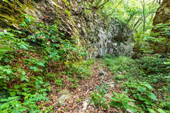 Beech forest and hiking trail Stock Image