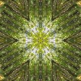 Beech forest in kaleidoscope Stock Image