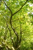 Beech forest late summer Stock Images