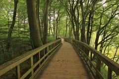 Beech forest at Moens Klint, Denmark. Royalty Free Stock Photos