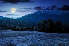 Beech forest near Apetska mountain at night. In full moon light. lovely summer landscape of Carpathian mountains Royalty Free Stock Photography