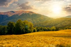 Beech forest near Apetska mountain at sunset. Lovely summer landscape of Carpathian mountains Royalty Free Stock Images