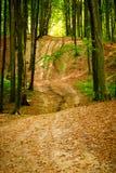 Beech forest near Rzeszow, Poland Stock Images