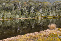 Beech forest reflecting in lake in New Zealand Royalty Free Stock Images