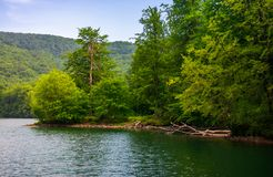 Beech forest on the shore of mountain lake. Beautiful summer landscape. clean environment concept Royalty Free Stock Photo