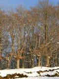 Beech forest at Urkiola, Abadino ( Basque Country) Stock Photo