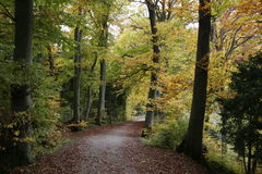 Beech Forests in Autumn. A path through the extensive beech forests around Zurich in October Stock Photos