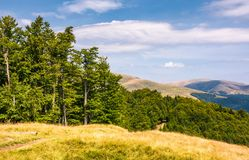 Beech forests of Carpathian mountains. Gorgeous landscape of Svydovets mountain ridge. beautiful nature scenery in late summer Stock Images