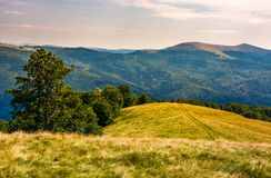 Beech forests of Carpathian mountains. Gorgeous landscape of Svydovets mountain ridge. beautiful nature scenery in late summer Stock Photos
