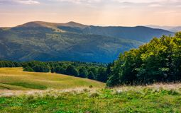 Beech forests of Carpathian mountains. Gorgeous landscape of Svydovets mountain ridge. beautiful nature scenery in late summer royalty free stock photography