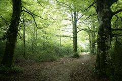 Beech green magic forest woods Stock Images