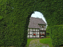 Beech hedge as windbreak. In front of a half-timbered house Royalty Free Stock Image