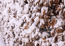 Beech hedge  Snow Abstract Texture Stock Images