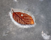 Beech leaf in ice Royalty Free Stock Images