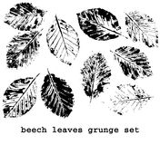 Beech leaf prints Royalty Free Stock Photo