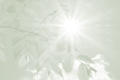 Beech leaves and rays of hope, sympathy background stock photo