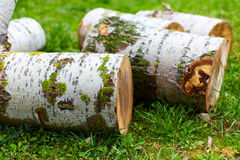 Beech logs Royalty Free Stock Images