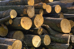 Beech logs Stock Images