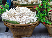 Beech mushroom on basket with various mushrooms Royalty Free Stock Images