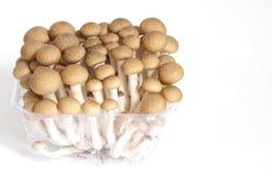 Beech mushroom Royalty Free Stock Photo