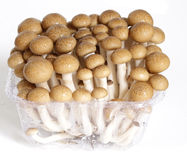 Beech mushroom Stock Photo