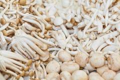 Beech mushrooms Stock Photography