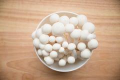 Beech mushrooms Royalty Free Stock Photo