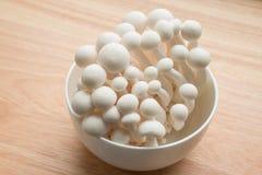 Beech mushrooms Royalty Free Stock Image